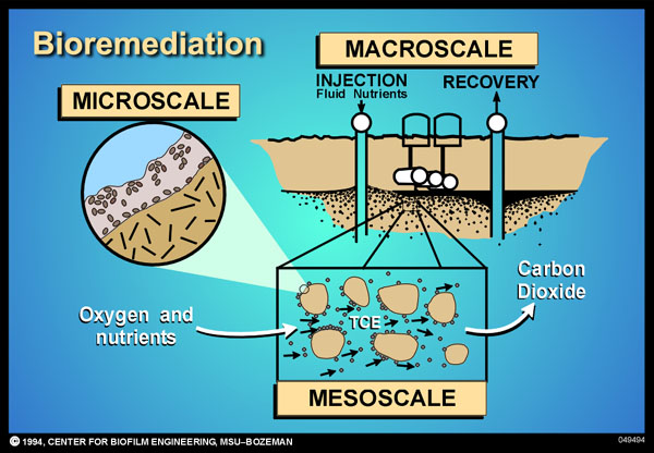 bioremediation methods for oil spills Extremely excited at the future prospects of bioremediation while harmful effects due to oil spills would soon be a thing of the past, the opportunities for.